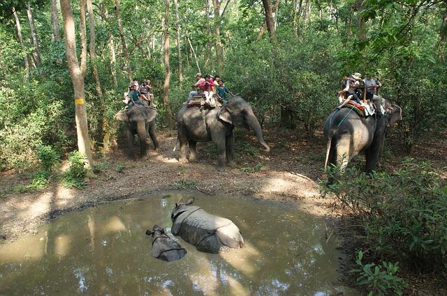 jazdenie na slonoch.jpg