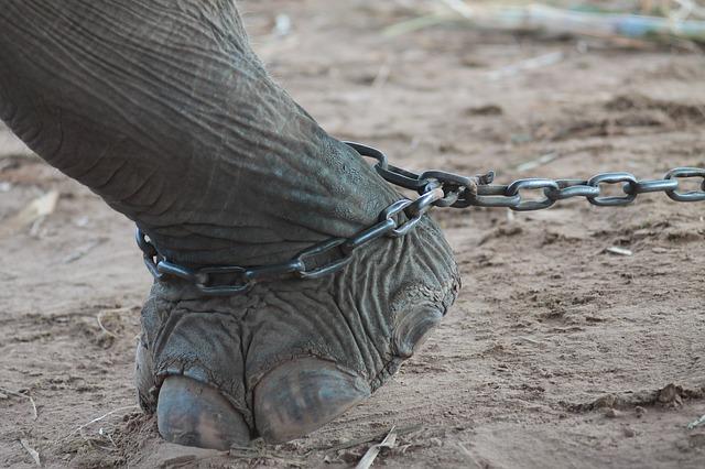 slon v reťazi.jpg